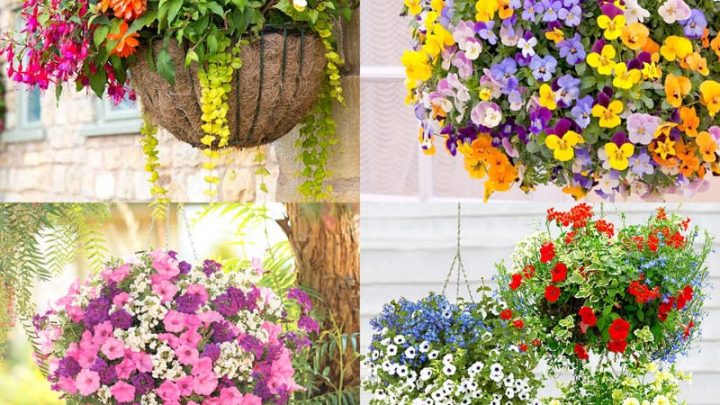 How to Hang Flowering Baskets to Beautify Your Porch or Patio